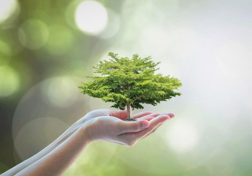Baum wächst in zwei Händen